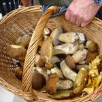 funghi_porcini_cesto