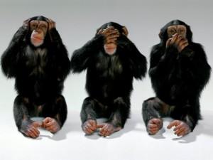 3-scimmie1