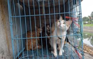 gattinigabbia
